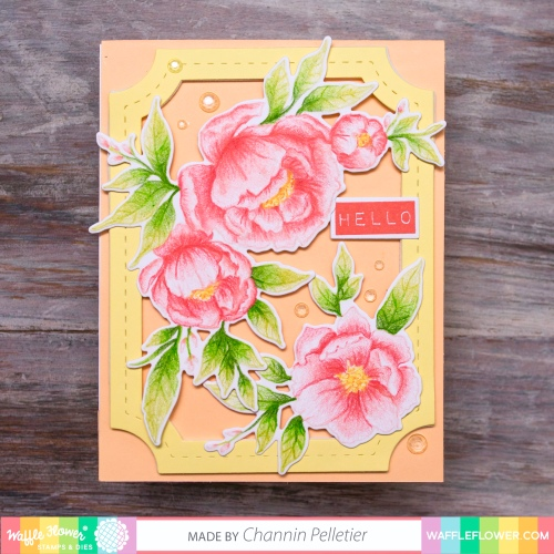 WFC201906-271247 Peony Notes-Channin 2A
